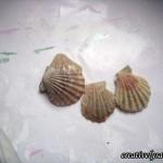 Shells-before paint